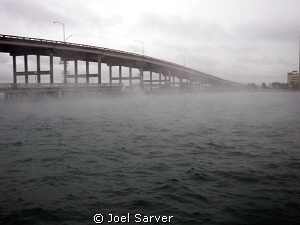 BLUE HERON BRIDGE 1/9/10.AIR TEMP 40 WATER 73 by Joel Sarver
